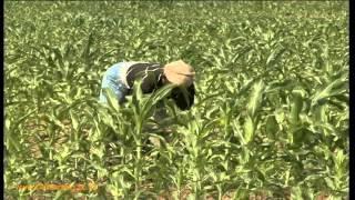 The Raging Debate On GMOs