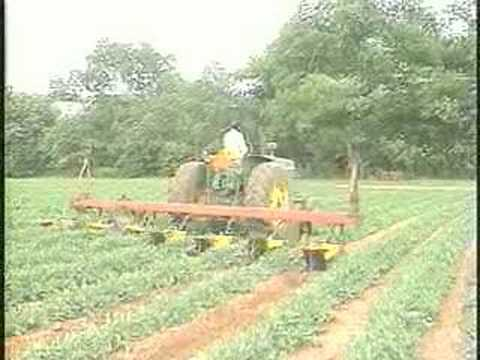 Global Warming Affects Crops, Food Supply