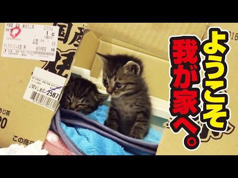 捨て猫2匹との素敵な出逢い 〜 wonderful story with two protected kittens.〜