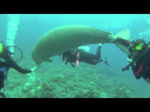 Dugong Dive in Port Vila, Vanuatu 8-21-10