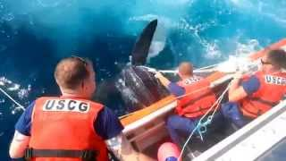 coast guard rescues enormous sea turtle off new jersey coast