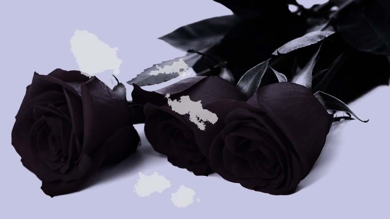 участниц прекрасно обворожительное фото в черном цвете уже