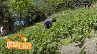 《攻坚日记》 20200521 四方石村的变迁(5)|CCTV农业