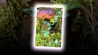 осеннее Кенозеро(, 2015-05-22T06:46:46.000Z)