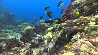 Ocean.Odyssey.2010.720p-part 3 (HD)