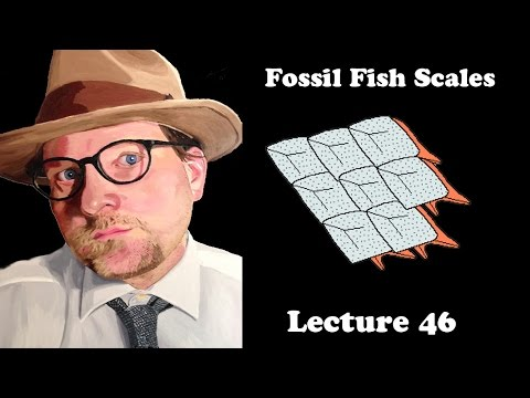 Lecture 46 Fossil Fish Scales