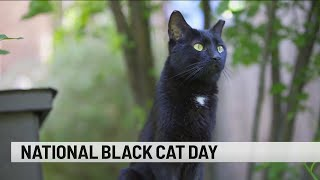 It's National Black Cat Day!