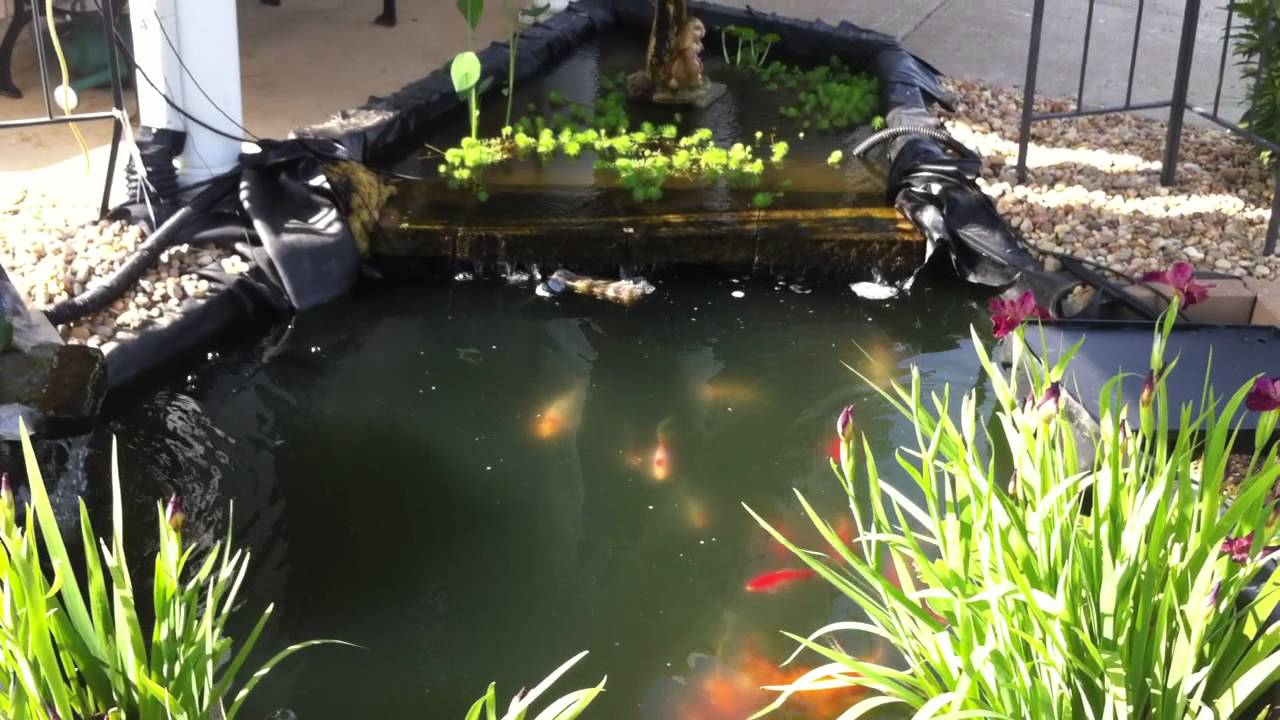 koi pond with seperate plants area youtube