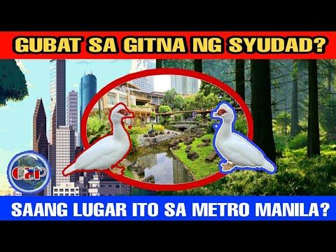 mini-jungle-sa-gitna-ng-ciudad-saan-ito-matatagpuan-sa-metro-manila?