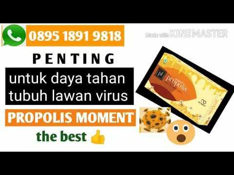 PROPOLIS MOMENT MANFAATNYA WA 089518919818