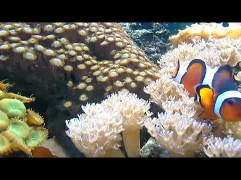 Sri Lanka Coral Reef Enrichment Program launched by Live Tropical Fish Exporters