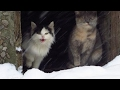 [Cat videos]  Hungry kittens out of the basement look at me and meow