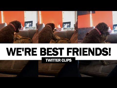 Adorable Dog Hugs A Cat! | Amazing Animal Friendships