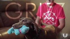 Laura's Story | Trupanion's Vet Direct Pay Saved My Dog