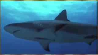 Видео дельфин спасает Собаку