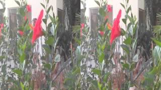 3D video без очков растительность на Крите в Греции(3D video без очков растительность на Крите в Греции., 2014-08-29T19:00:25.000Z)