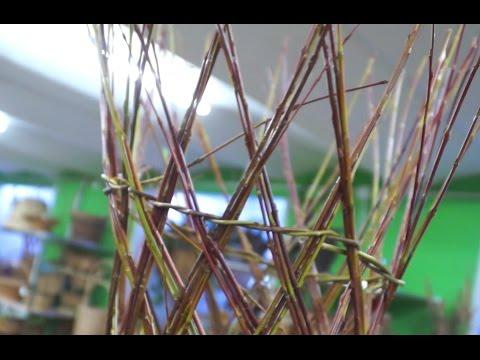 Плетение из ивы: дерево своими руками