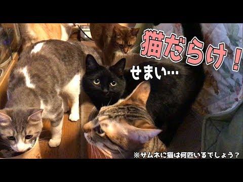 【天国】部屋の猫密度が高すぎてどこ見ても猫なんだけどwww