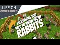 Everything About Rabbits in Minecraft: Killer Bunny + All You Need to Know about Rabbits (Avomance)