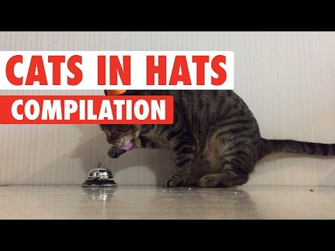 Funny Cats In Hats Video Compilation 2017