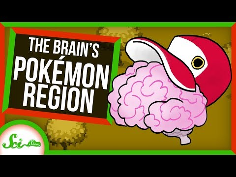Pokémon Brain Region Reveals How Our Brains Categorize | SciShow News