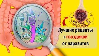 Гвоздика от паразитов и глистов: как принимать, полезные свойства и противопоказания