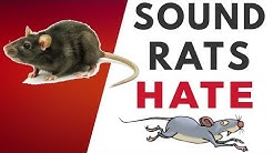 Sound Rats Hate  | HQ
