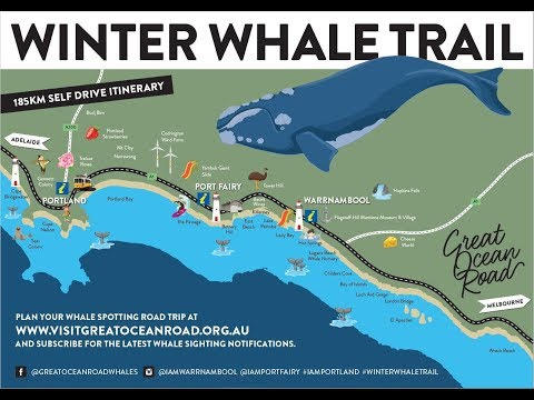 Whale Mail Portland, Portland, Cape Bridgewater, Great Ocean ... on map of vaquita, map of northeastern caribbean, map of orcas, map of england, map of wild horses, map of rhinoceros, map of starfish, map of shrimp, map of uk, map of chimps, map of lobsters, map of swans, map of slot canyons, map of wales with towns and cities, map of scotland, map of shark finning, map of icebergs, map of wales united kingdom, map of octopus,