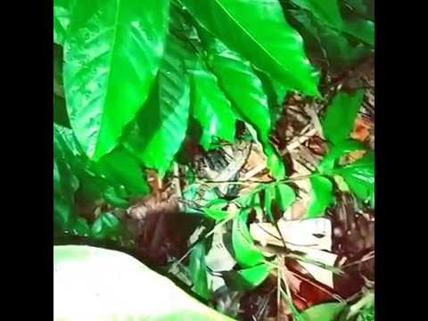 Releasing Snake In Singapore - Pest Control Singapore