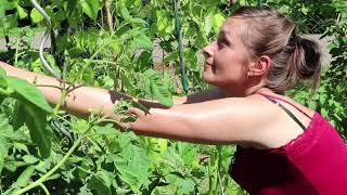 Grüner Leben - Eine Reportage über ökologische Projekte