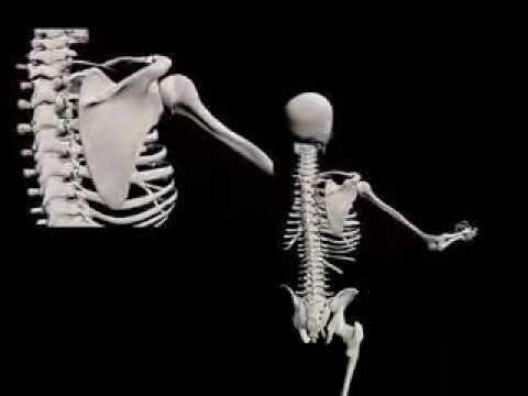 Articulación GlenoHumeral Movimientos - YouTube