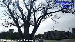 Лукоморье города Холмск