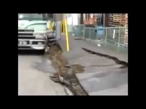 Ground Liquefaction in Japan after earthquake.
