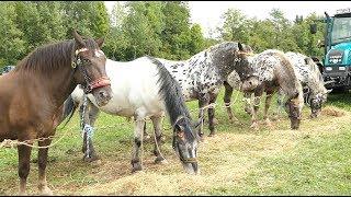 Los-Drama bei Pferdeverlosung am Pferdemarkt :/