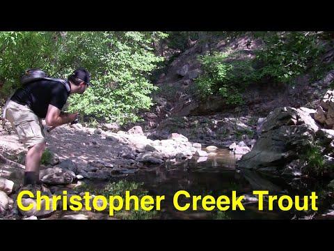 Trout Fishing Arizona's Christopher Creek