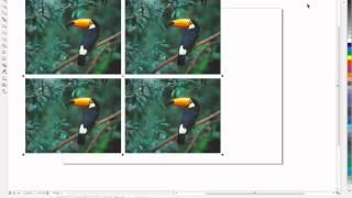 Урок Corel Draw - Растровые картинки