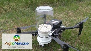 Droni contro piralide del mais: uno a zero