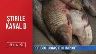 Stirile Kanal D (15.05.2019) - Peste si scoici romanesti toxice! | Pericol urias din import!