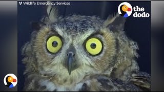 Owl Gets Rescued From Net | The Dodo thumbnail
