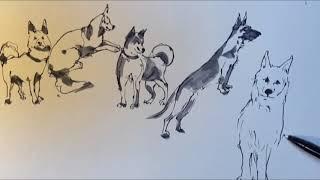 강아지 스케치 (Dog drawing) - 다양한 강아…