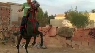 شعر عن الخيل :ازرڨ كما نيل سودان