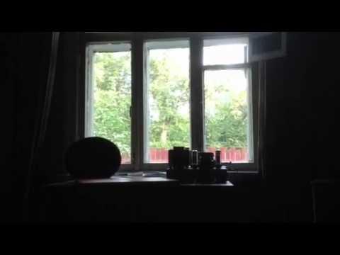 В Тюмени домашняя кошка заменила брошенной обезьянке маму - YouTube
