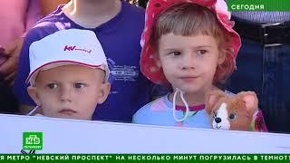 Дефицит парков, плохая экология, дольщики: о каких проблемах рассказали Путину его земляки