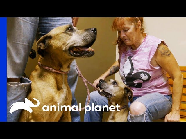 A Call to Tia May Have Saved This Rescue Dog's Life | Pit Bulls & Parolees
