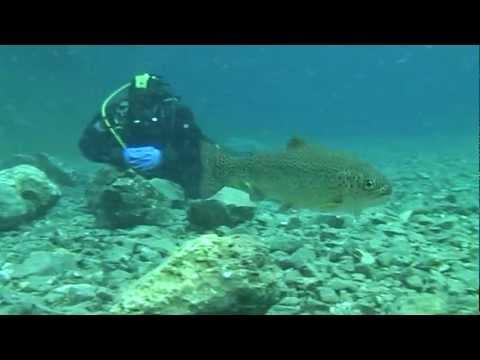 Scuba diving in Austria-Grüner see