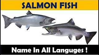 SALMON Fish Name In Different Languages
