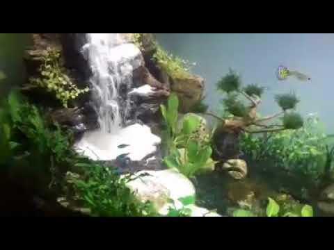 Cara Membuat Air Terjun Di Aquascape Youtube