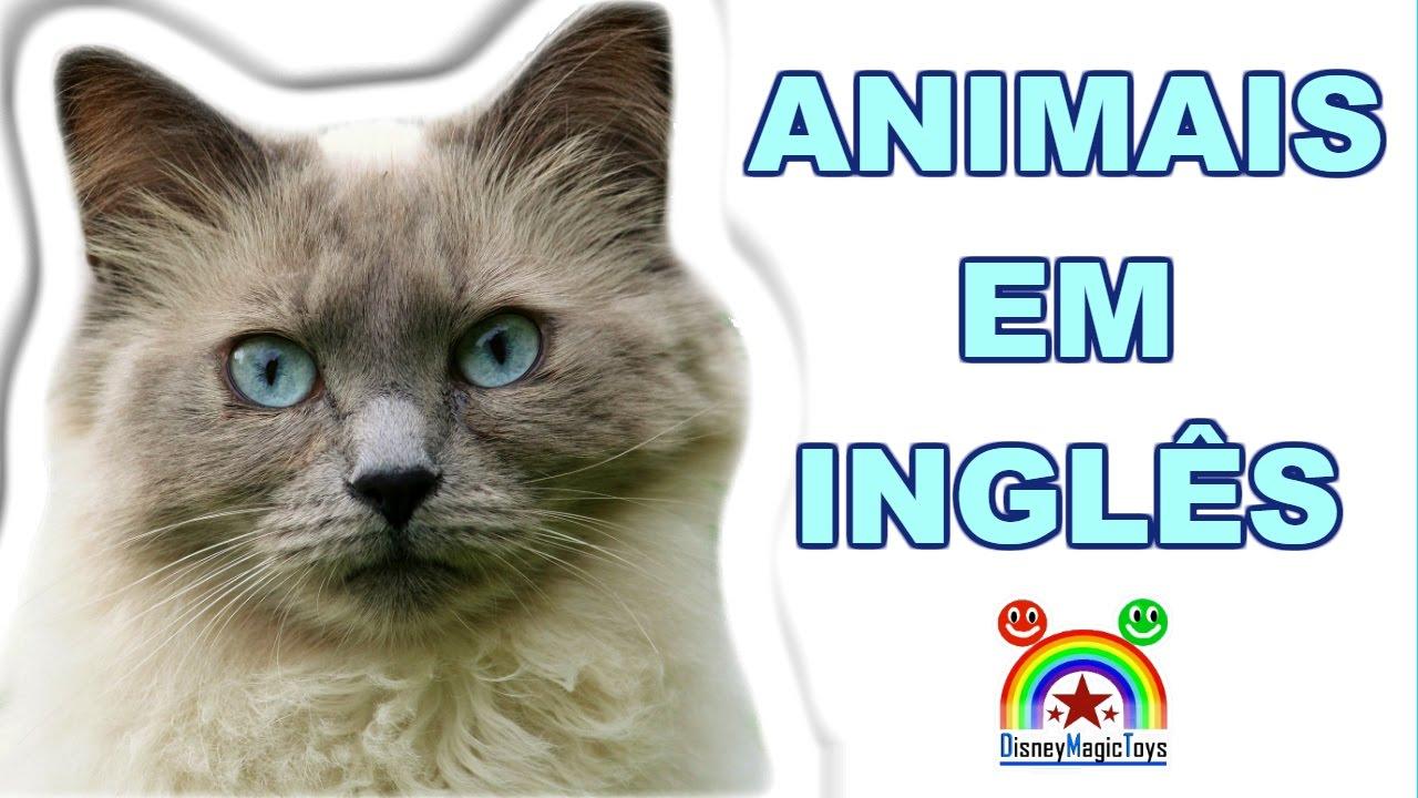 Animais em Inglês - Aprende nomes dos bichos em Ingles - Grátis e Fácil