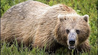 I Was Chased By A Grizzly In Alaska