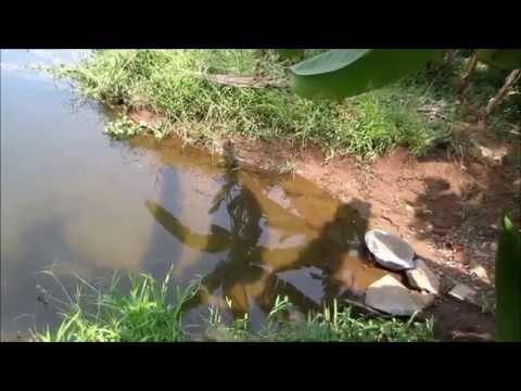 Aluva River - Periyar (Aluva Puzha)